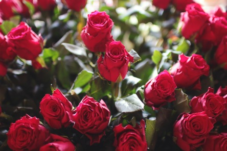 red-love-romantic-flowers