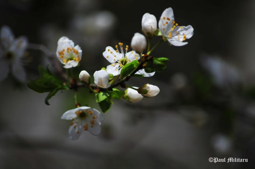 white-spring-flowers